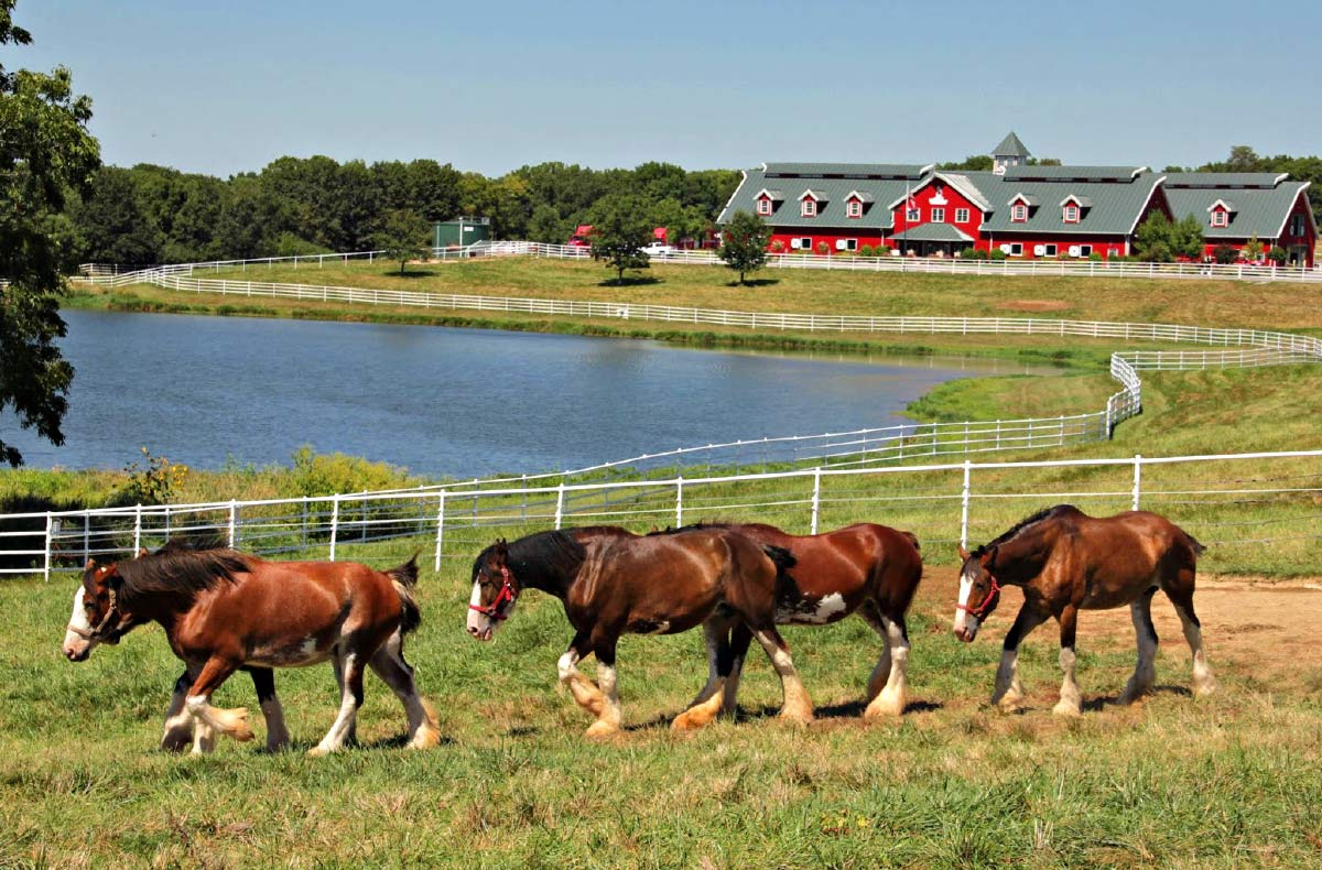 Warm Springs Ranch is a nearby sight for Rocheport visitors to enjoy
